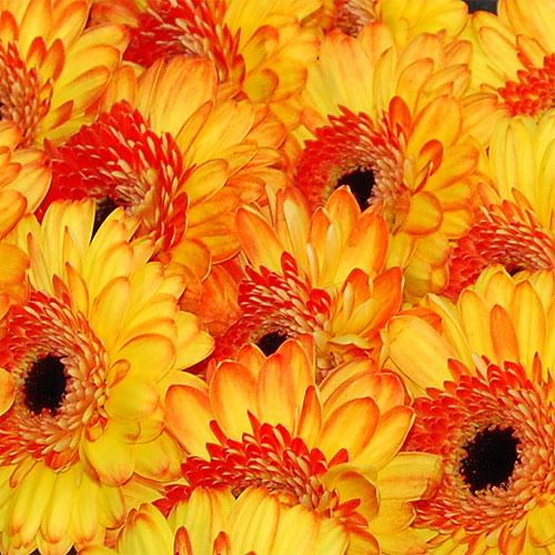 Blumen der Extraklasse